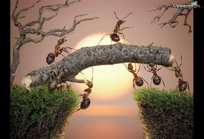 mravlja-prica-1
